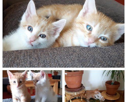 Oliver och Nisse