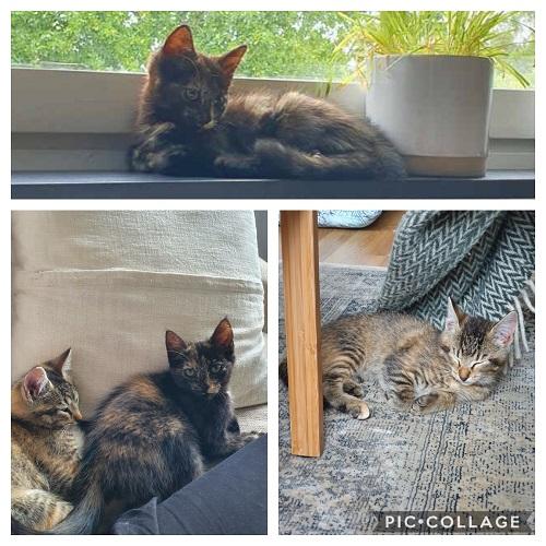 Upphittade katterna Ebba och Siri