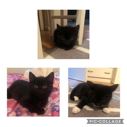 Black Katt Weekend – Månadens Tjuga