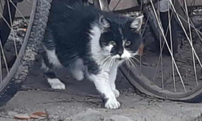 Uppdatering Katten Jansson numera Jill